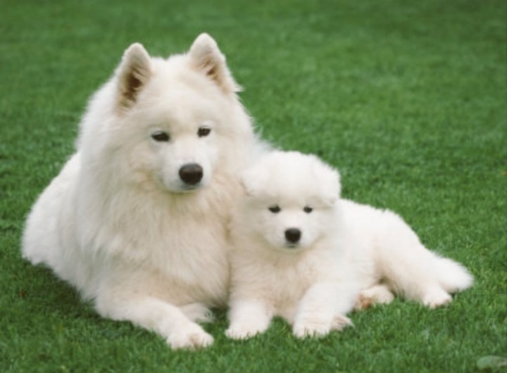Bringing a Puppy into a Home With an Adult Dog